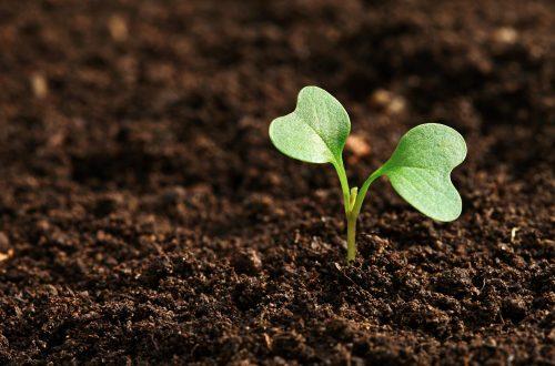 Pflanze wächst aus der Erde
