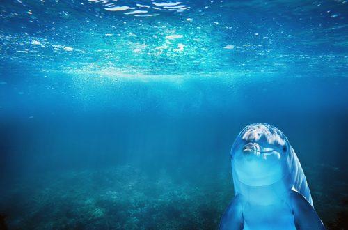 Delphin im Wasser